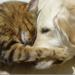 catanddog_friends_quadruped_1