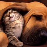 catanddog_friends_quadruped_2