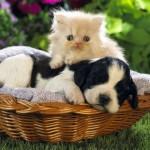 catanddog_friends_quadruped_3