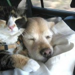 catanddog_friends_quadruped_4