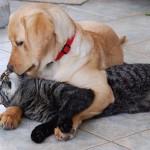catanddog_friends_quadruped_5