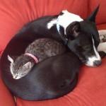 catanddog_friends_quadruped_6