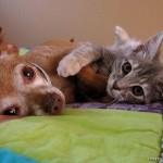 catanddog_friends_quadruped_7