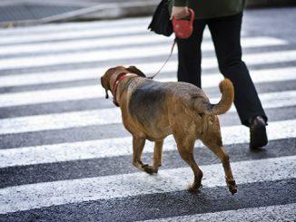 Прогулки с собакой: что должен знать хозяин