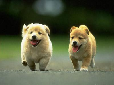 Воспитание щенка: с чего начать