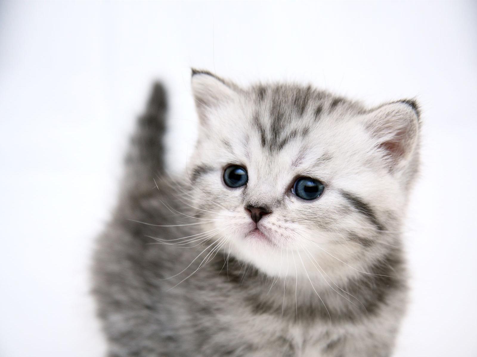 Воспитываем котенка