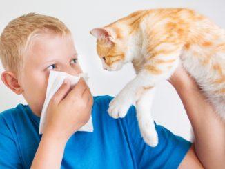 Аллергия на питомца: что делать?