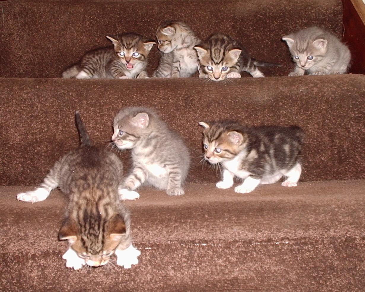 Как отлучить котёнка от матери?