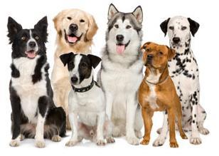 Какую породу собак выбрать?