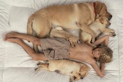 Всё о собаках-компаньонах