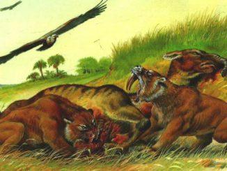 Древние кошачьи - саблезубые тигры