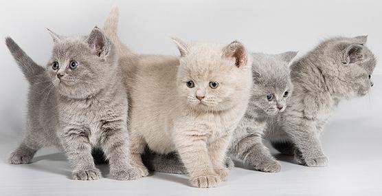 Как назвать котёнка?
